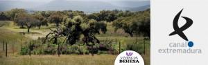 Informativos Canal Extremadura hace un reportaje a Vivencia Dehesa, Valdepajares de Tajo, en Cáceres. Una dehesa revitalizada que organiza rutas ecoturísticas,  observación de aves y cursos durante todo el año. Fabrica excelentes productos naturales.