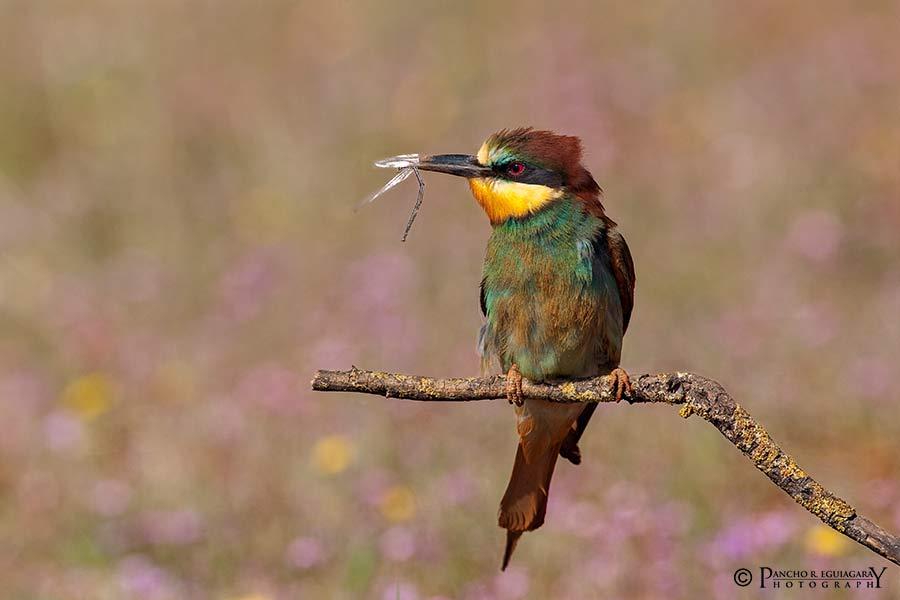 Cursos de fotografía de naturaleza