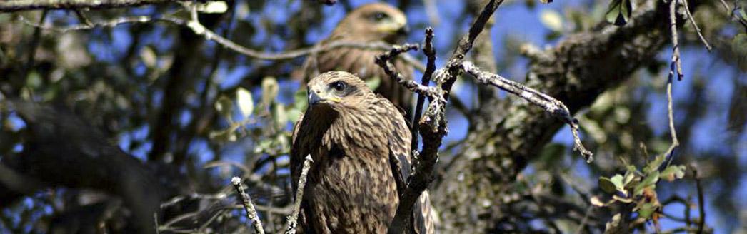 avistamiento de aves y fauna