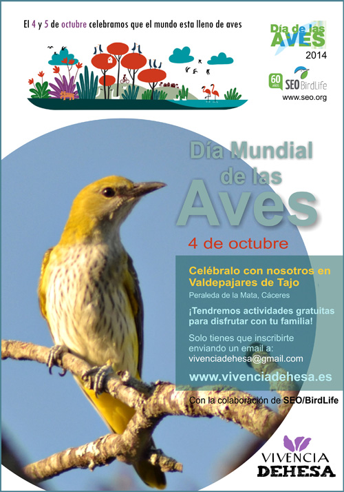 Dia-de-las-Aves-SEO_Web