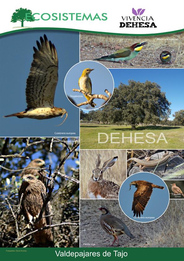 FIO 2016 Feria Internacional de Turismo Ornitológico