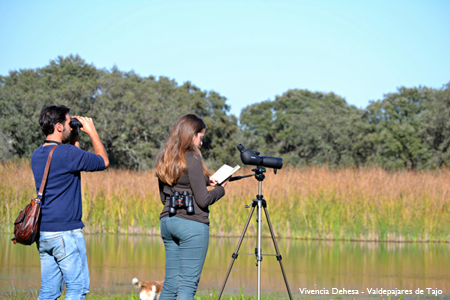 Birdwatching Vivencia Dehesa