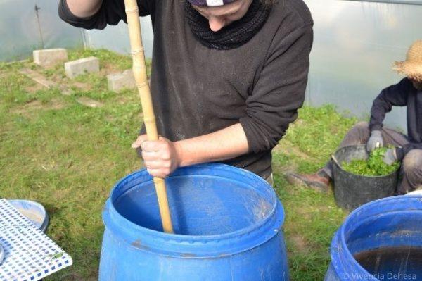 Nuestro agricultor Miguel vestido con su jersey azul oscuro está removiendo el bidón azul con un palo largo de madera. Su cara aparece cortada pero está mirando hacia dentro del bidón. El fondo es el suelo del invernadero verde de plantas.